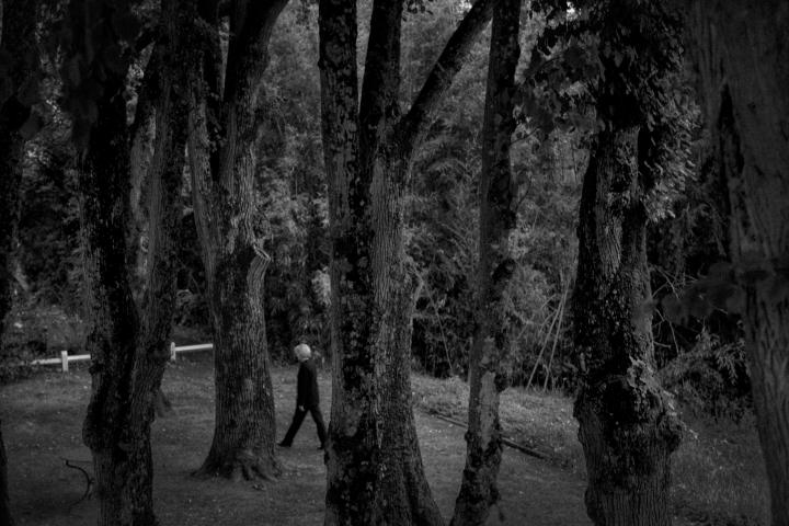 loire_woods